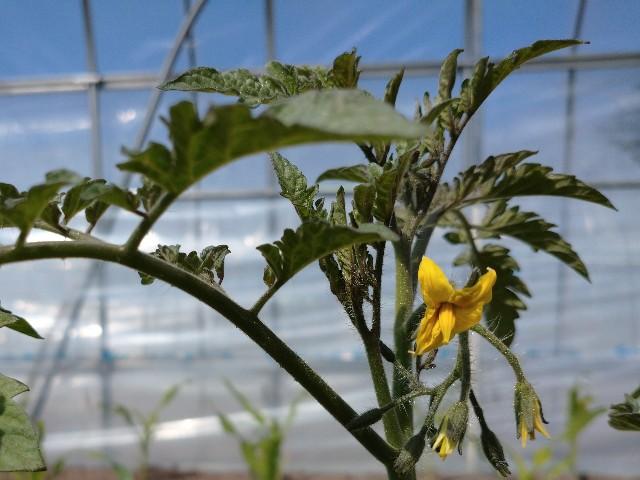 f:id:vegetablist:20200523204444j:image