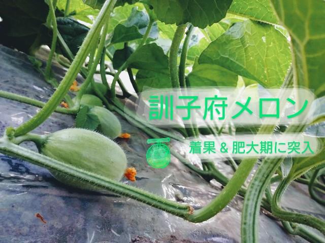 f:id:vegetablist:20200601193432j:image