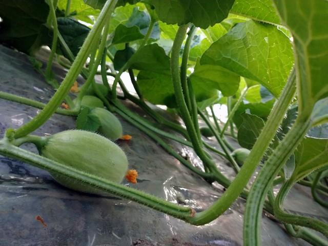 f:id:vegetablist:20200601193505j:image