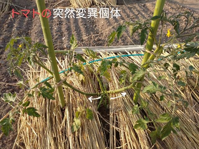 f:id:vegetablist:20200603225920j:image