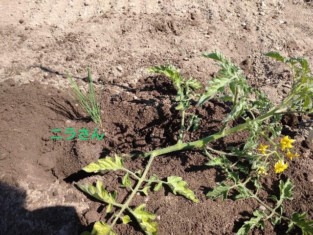 f:id:vegetablist:20200603230118j:image