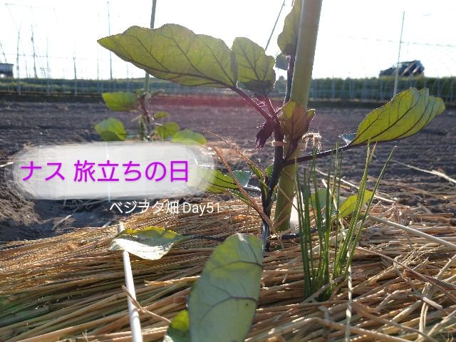 f:id:vegetablist:20200605215249j:image