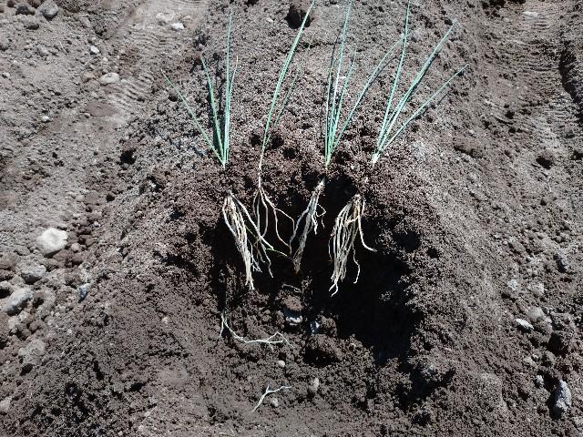 f:id:vegetablist:20200605215507j:image