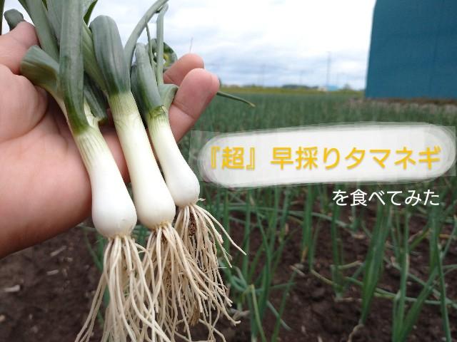 f:id:vegetablist:20200607002320j:image