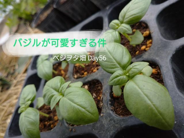 f:id:vegetablist:20200608214931j:image