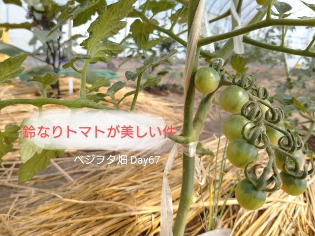 f:id:vegetablist:20200615231002j:image