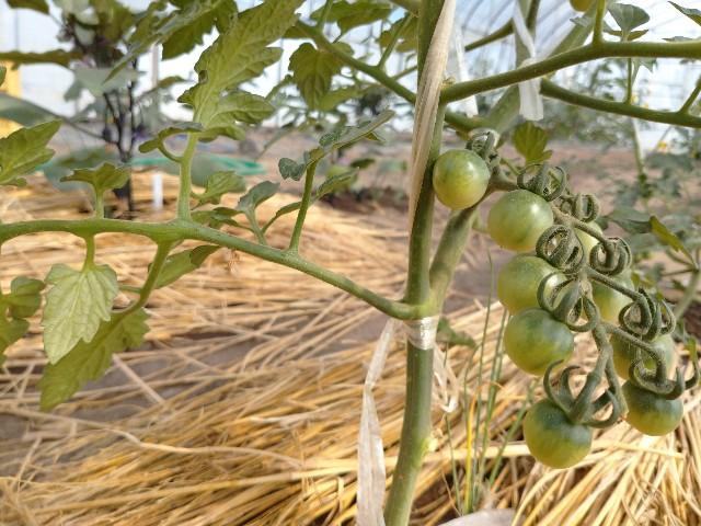 f:id:vegetablist:20200616061108j:image