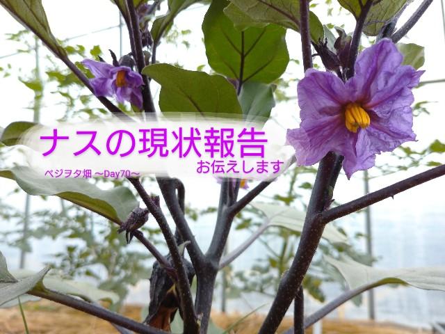 f:id:vegetablist:20200619182814j:image