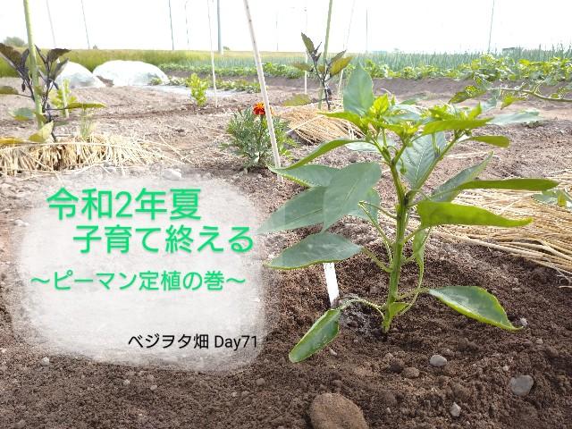 f:id:vegetablist:20200621061946j:image