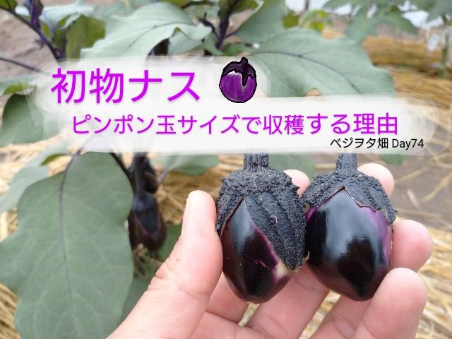 f:id:vegetablist:20200623225319j:image
