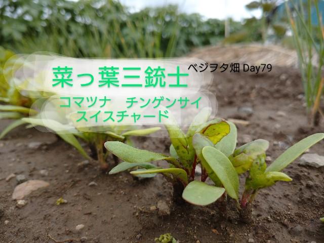 f:id:vegetablist:20200629210800j:image