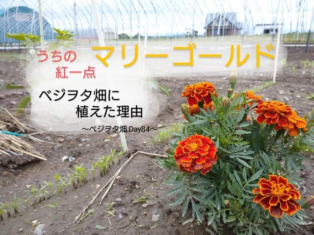 f:id:vegetablist:20200704095614j:image