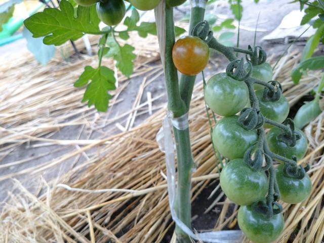 f:id:vegetablist:20200711055224j:image