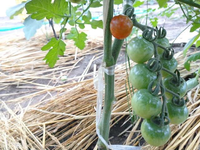 f:id:vegetablist:20200711055249j:image