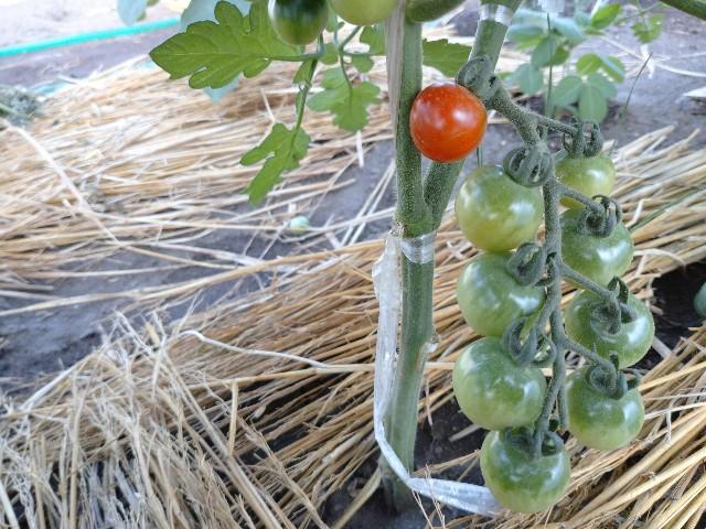 f:id:vegetablist:20200711055307j:image