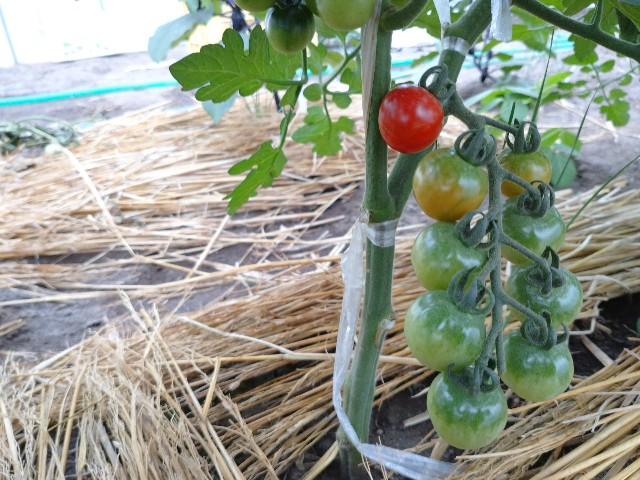 f:id:vegetablist:20200711055324j:image