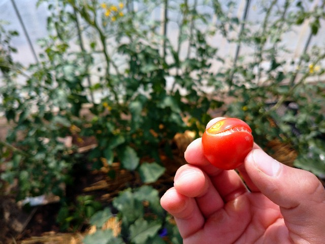 f:id:vegetablist:20200711055844j:image