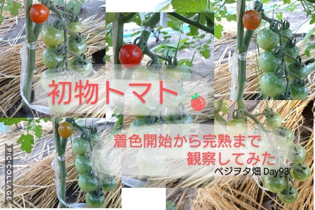 f:id:vegetablist:20200712060335j:image