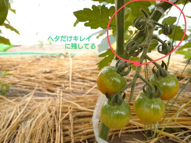 f:id:vegetablist:20200714220313j:image
