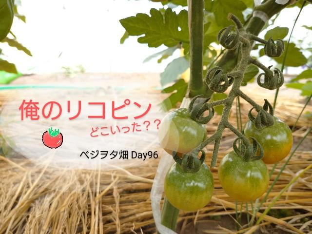 f:id:vegetablist:20200714222456j:image