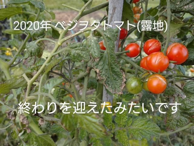f:id:vegetablist:20201007221022j:image