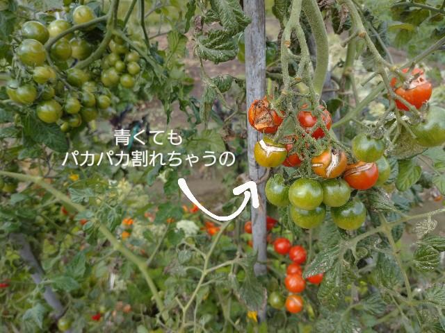 f:id:vegetablist:20201007221054j:image