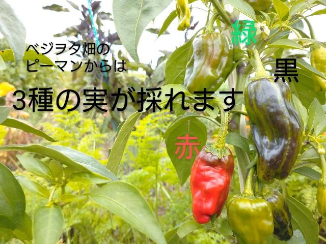 f:id:vegetablist:20201009213235j:image