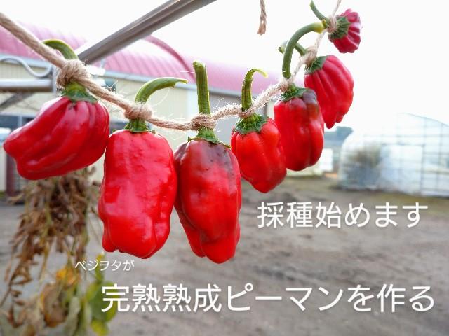 f:id:vegetablist:20201014061108j:image