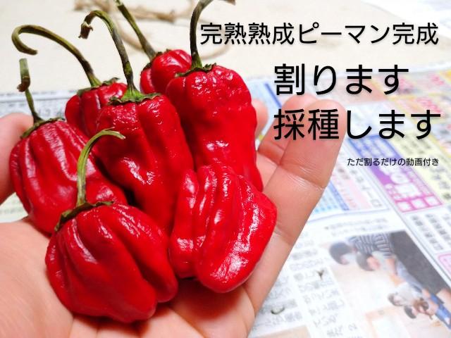 f:id:vegetablist:20201020215957j:image