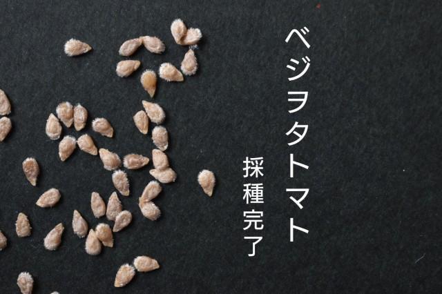 f:id:vegetablist:20201230194920j:image
