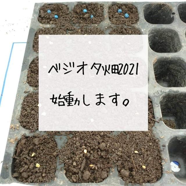 f:id:vegetablist:20210504120357j:image