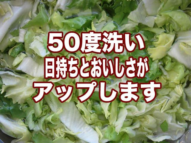 50度洗いで葉物野菜を洗っているこの記事のアイキャッチ画像