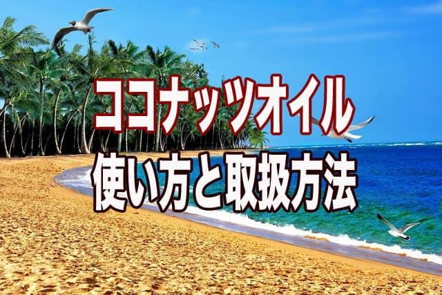 この記事のアイキャッチ画像。ココナッツの生えた海岸の写真