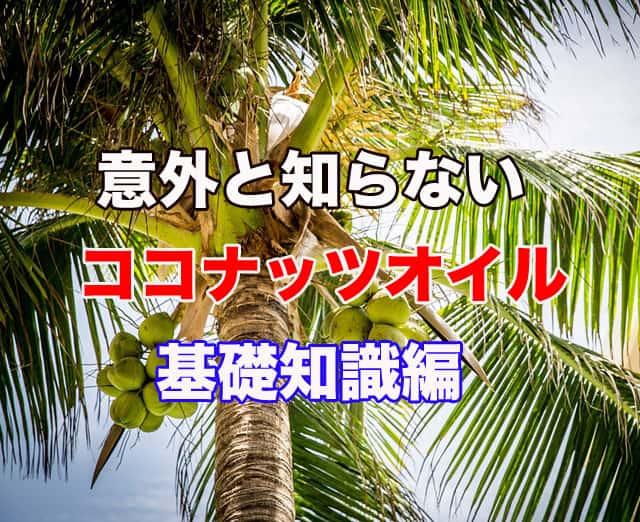 ココナッツの木の写真。この記事のアイキャッチ画像。