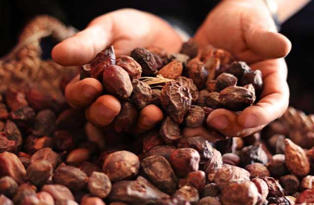 乾燥したアルガンの果実を手ですくっている写真