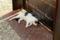 ジェノヴァ;日向ぼっこの猫