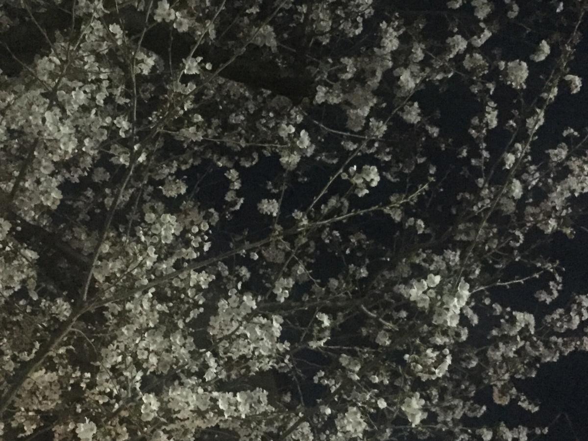f:id:venusbreeze:20190331184916j:plain