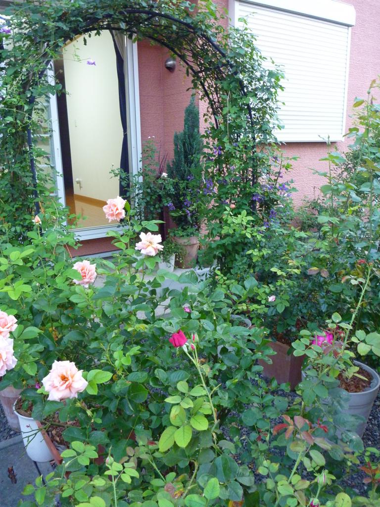 f:id:verandarosegarden:20160806081049j:plain