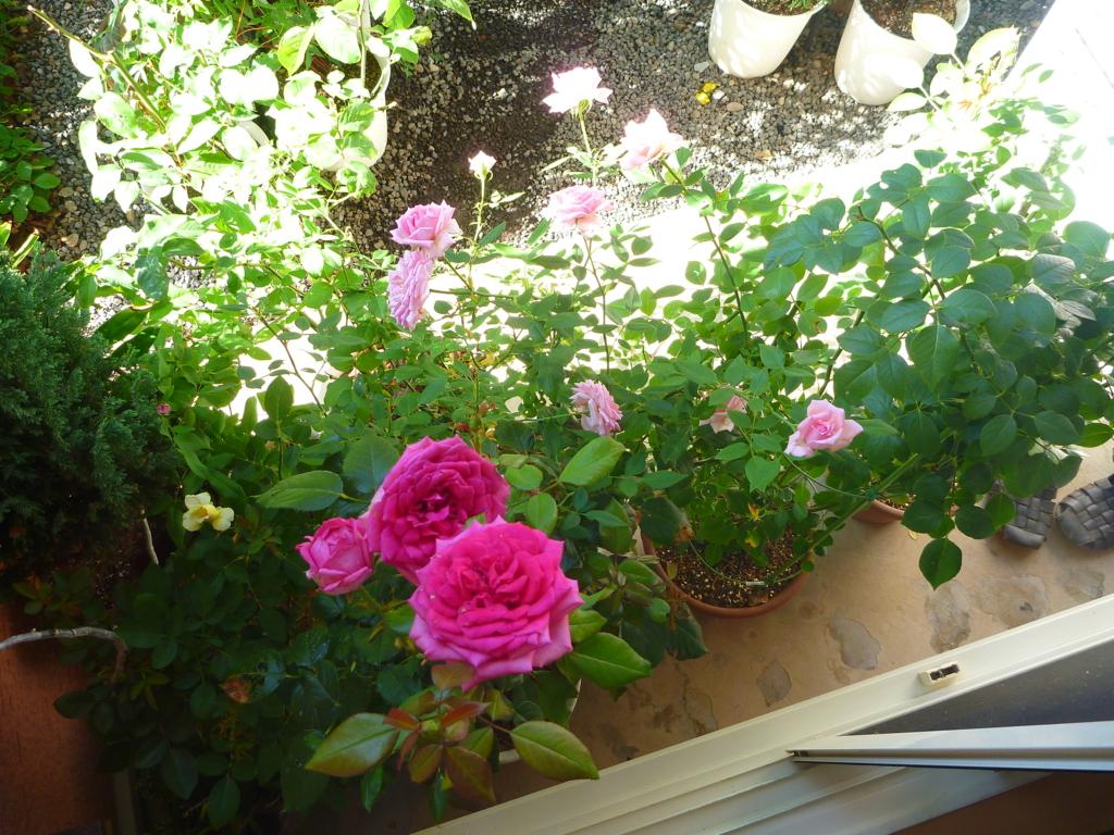 f:id:verandarosegarden:20160817083951j:plain