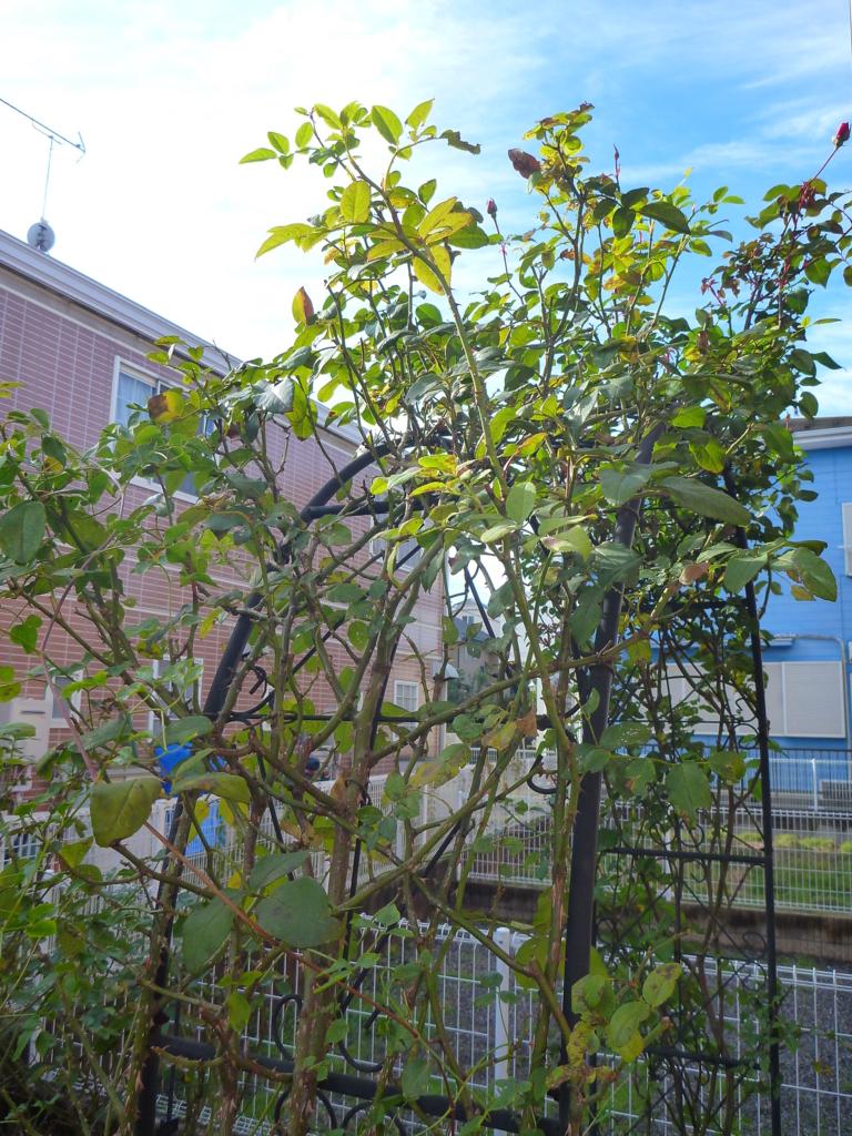 f:id:verandarosegarden:20161206154133j:plain