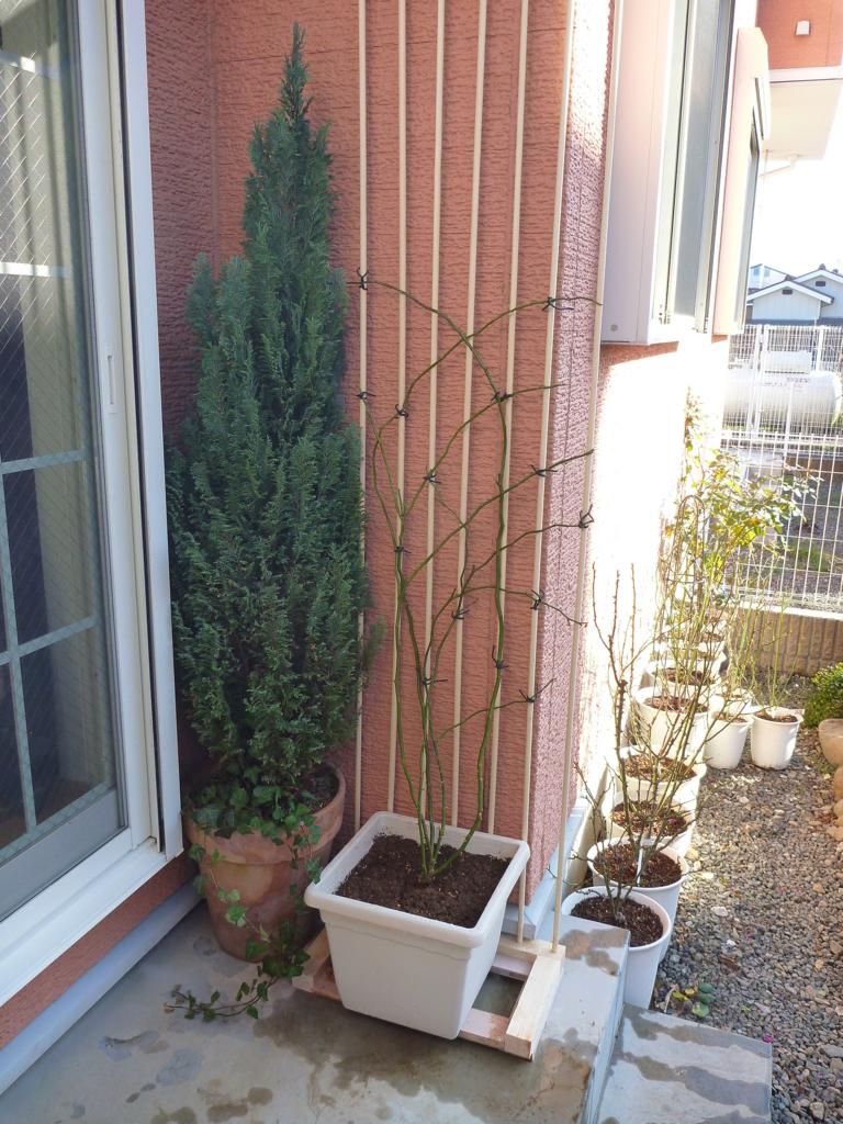 f:id:verandarosegarden:20170107135124j:plain