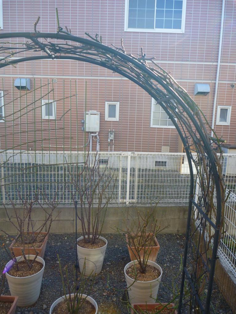 f:id:verandarosegarden:20170125153651j:plain