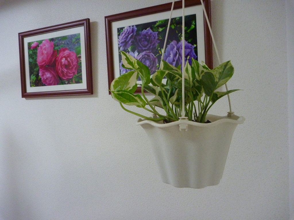 f:id:verandarosegarden:20170221190124j:plain