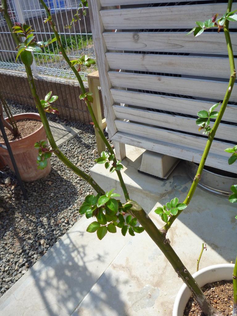 f:id:verandarosegarden:20170320135324j:plain