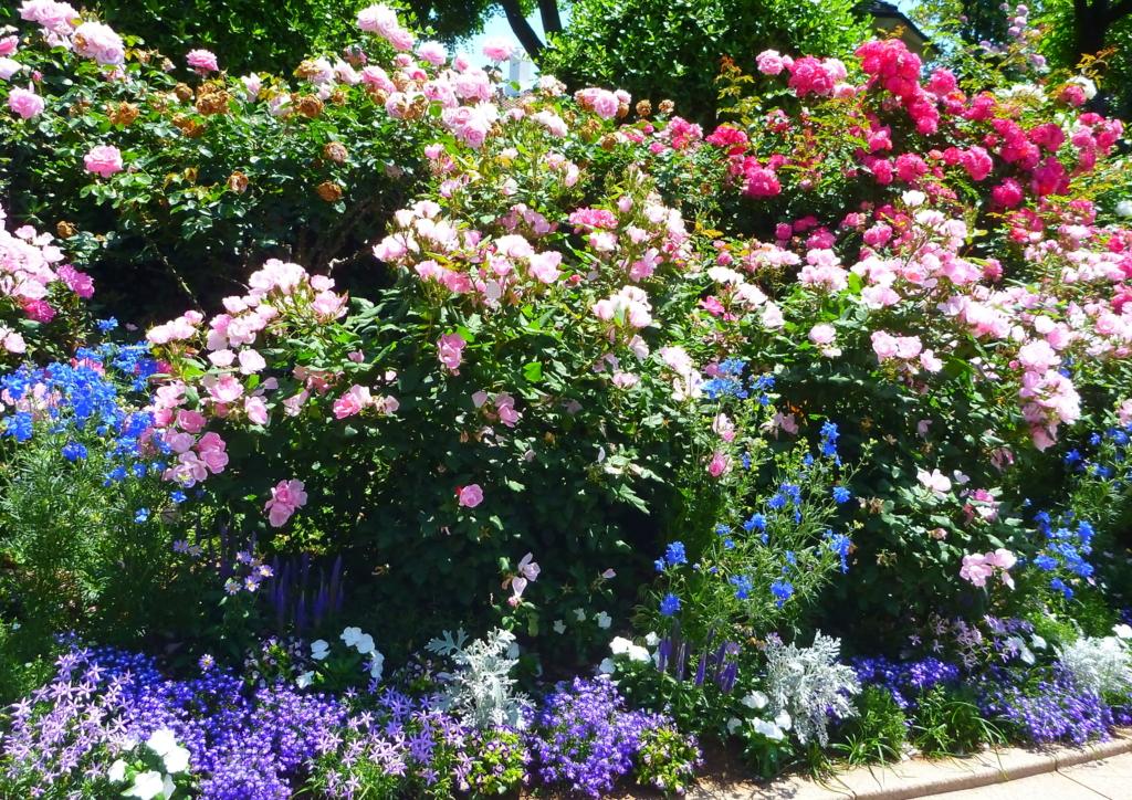 f:id:verandarosegarden:20170524083251j:plain