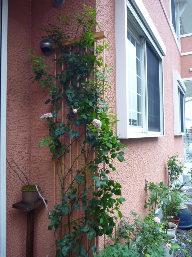 f:id:verandarosegarden:20170812100602j:plain