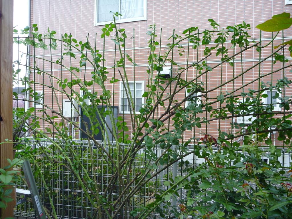 f:id:verandarosegarden:20170813145514j:plain