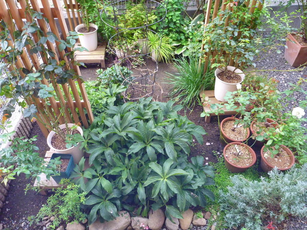 f:id:verandarosegarden:20171001083139j:plain