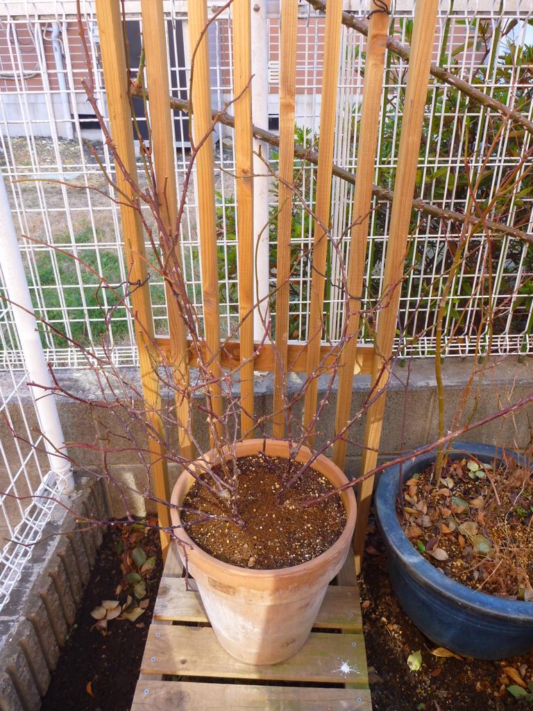 f:id:verandarosegarden:20180116151613j:plain