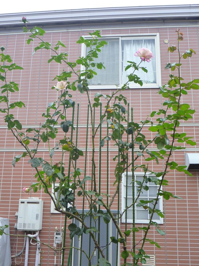 f:id:verandarosegarden:20181111154635j:plain